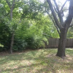 Front House Backyard